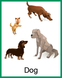 4-H Dog project
