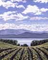 Farmland with a vista