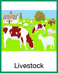 4-H Livestock projects