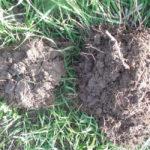Dirt during a pasture walk