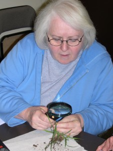 Diane inspects a turf sample