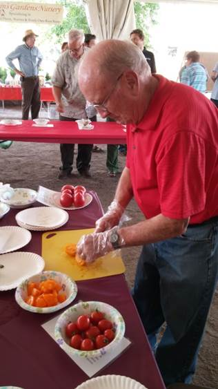 Tomatoes being prepared for competition