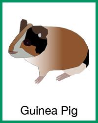 Guinea pig project navigation