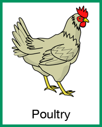 Poultry project navigation