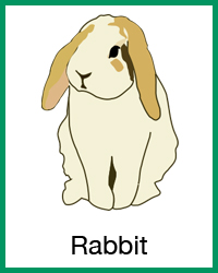Rabbit project navigation