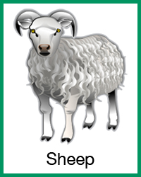 Sheep project navigation