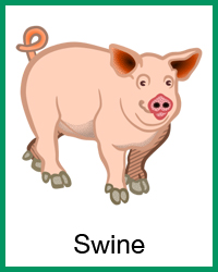 Swine project navigation