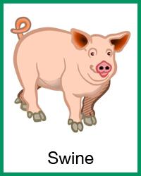 Swine project navigation