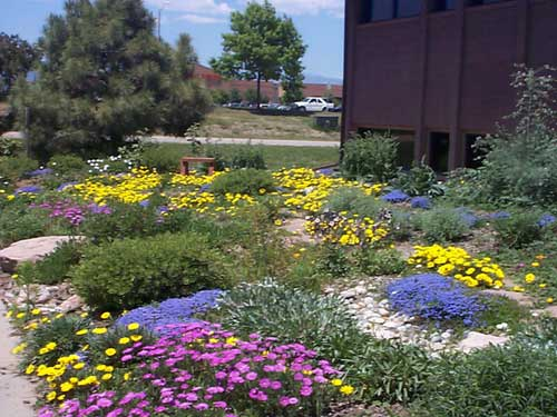 Boulder Xeriscape demonstration garden