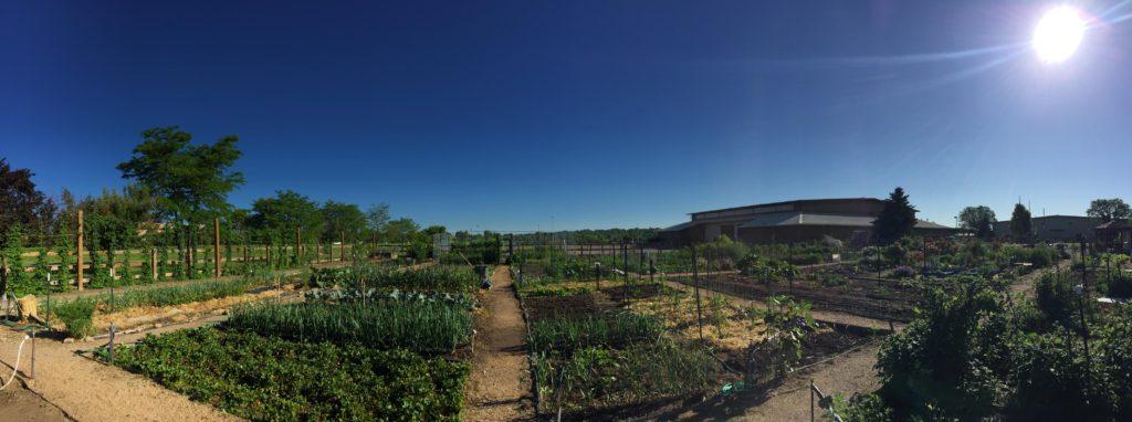 Panorama of  community gardens