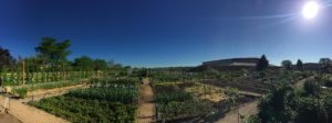 Panorama of Boulder Fairground's Community Garden