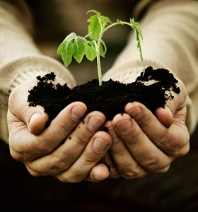 Hand holding soil and seedlings