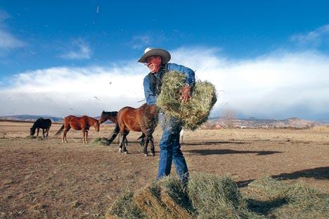 Zeb working in horse pasture