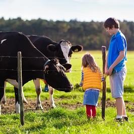 Kids Feeding Cows