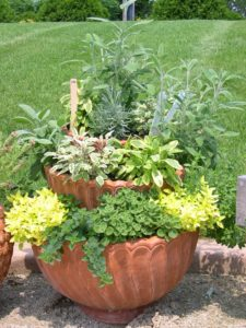 Herb pots as a container garden