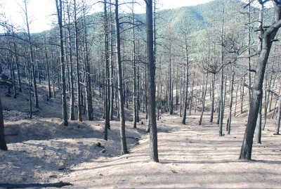 burn area in mountain area