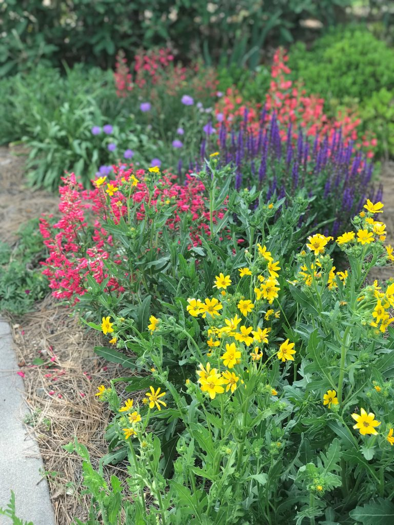 Plant Select Demonstration Garden