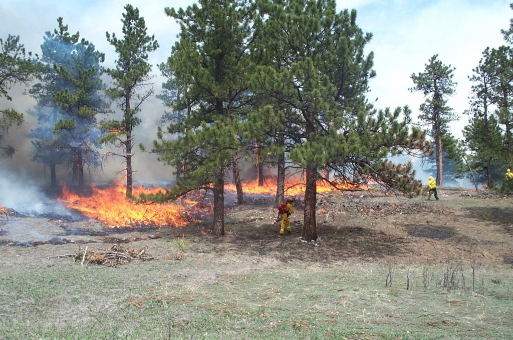 Photo of a wildfire burning through grasses and forest trees